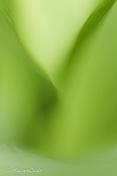 Grüner Mai